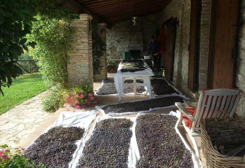 The portico during the olive harvest