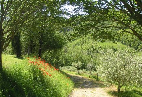A garden track